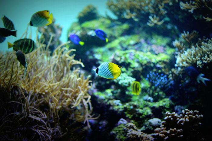 海藻は美髪の友